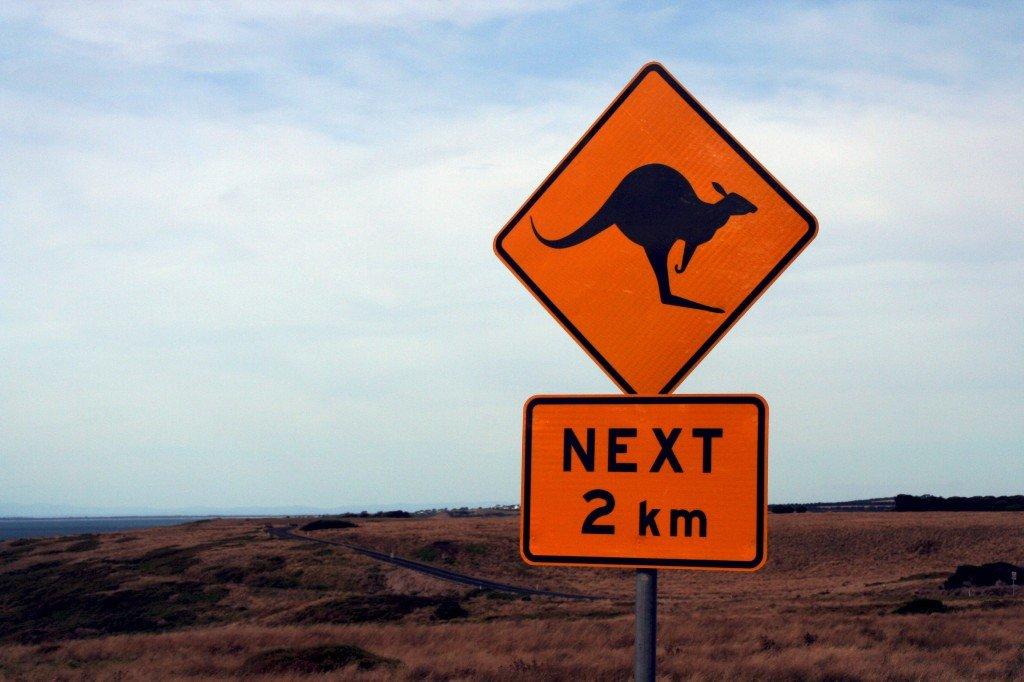 Uważaj na kangury, czyli ubezpieczenie na wyjazd do Australii.