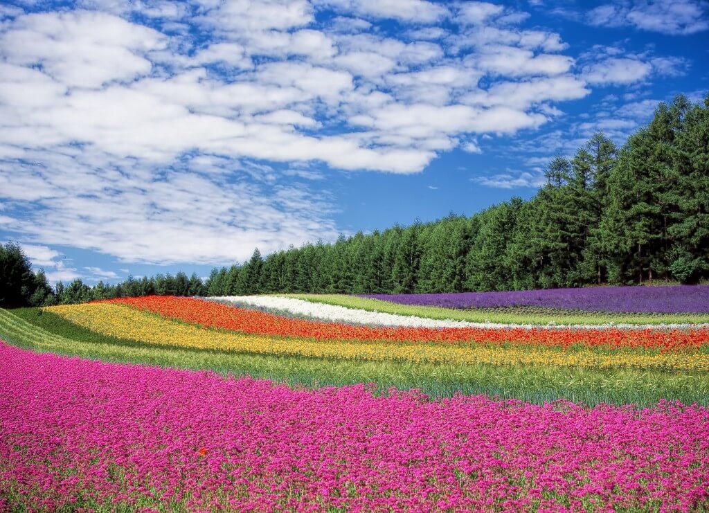 Porównujemy ubezpieczenie turystyczne do Japonii