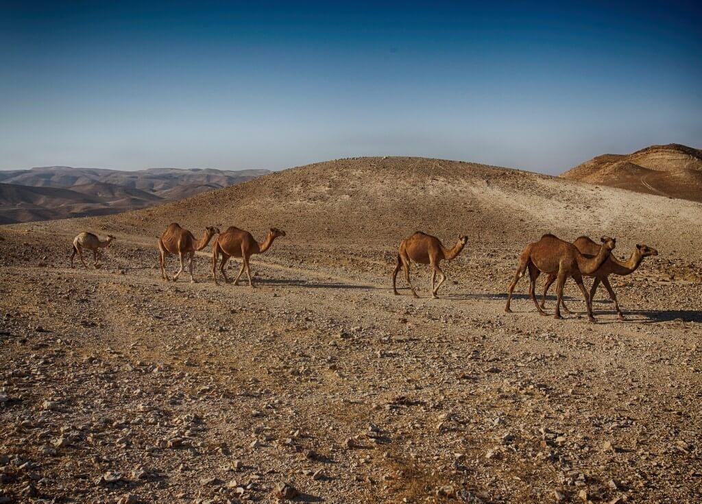 Polecamy ubezpieczenie turystyczne do Izraela. Gdzie znajdziesz najlepsze?