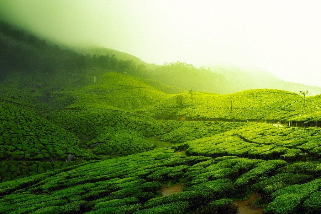 ubezpieczenie turystyczne do Indii - bezpiecznie na plantacjach, przy zabytkach i w poróży