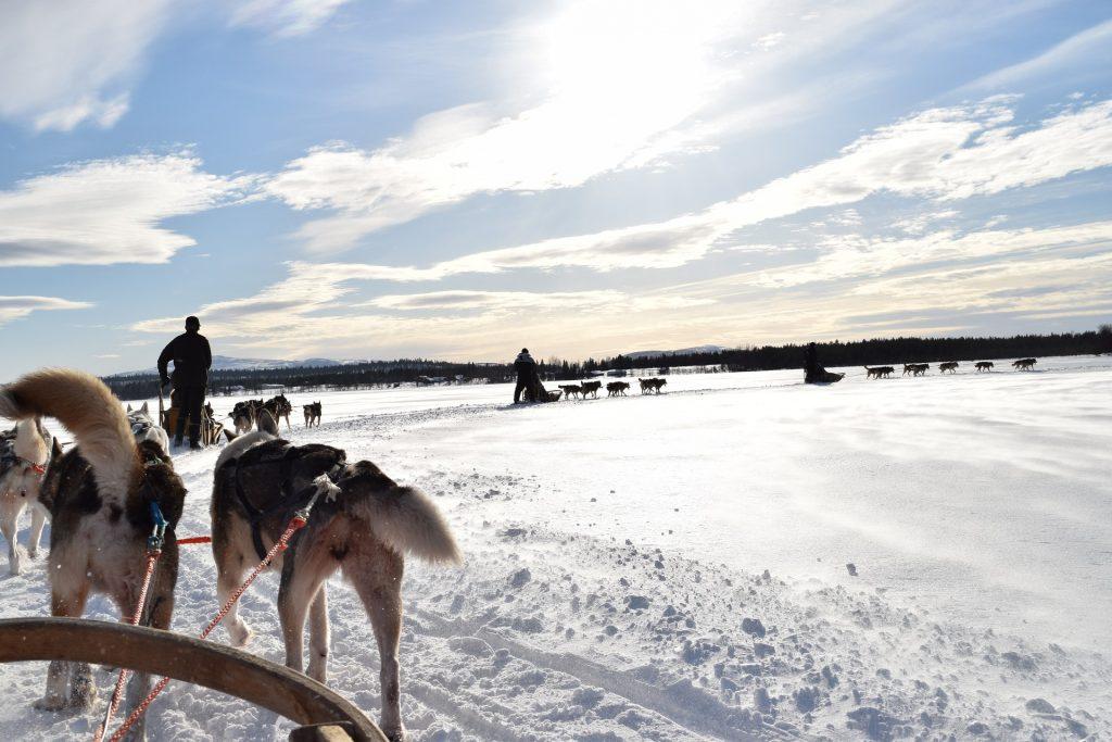 Sylwester w Laponii i przejażdżka psim zaprzęgiem